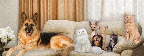 Клуб Форвард-кз Павлодар. Клуб кошек и собак Павлодар