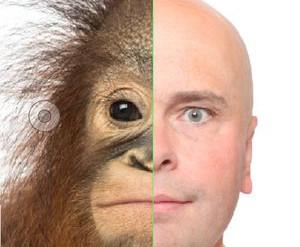 Un singe homme, un homme singe ?