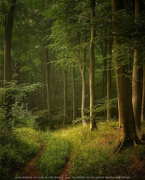 At dusk in the woods copy.jpg