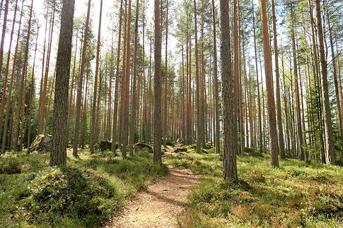 Photo forêt Béké Large
