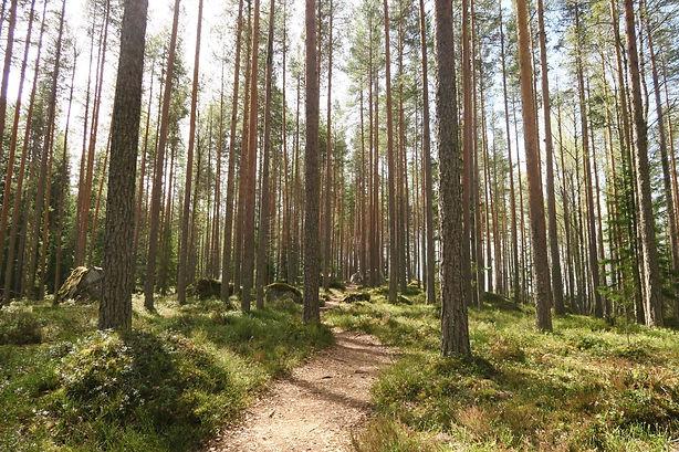 Photo forêt Béké