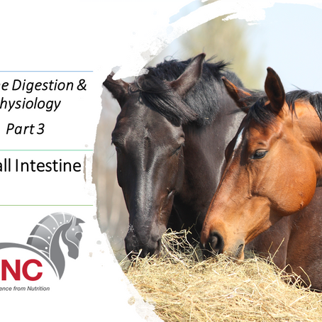 Online Equine Digestion and Physiology - Part 3: The Small Intestine