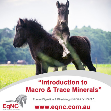 Introduction to Macro & Trace Minerals