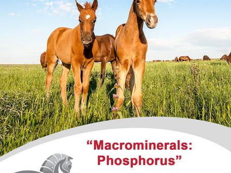 MacroMinerals - Phosphorus
