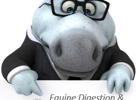 Online Equine Digestion and Physiology - Part 4: The Large Intestine