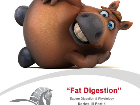 Welcome to the next chapter in our Equine Digestion and Physiology Series: Fats (Part 1).