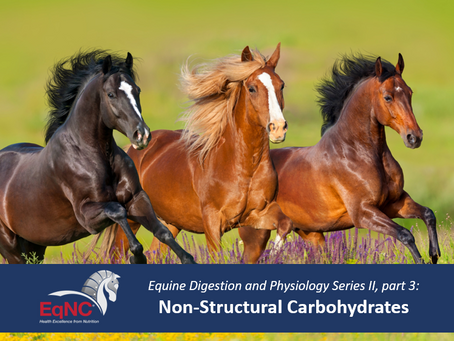 EqNC's Equine Digestion and Physiology: Non-Structural Carbohydrates