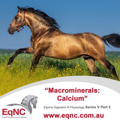 Macrominerals - Calcium
