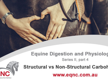 Equine Digestion and Physiology: Structural vs Non-Structural Carbohydrates