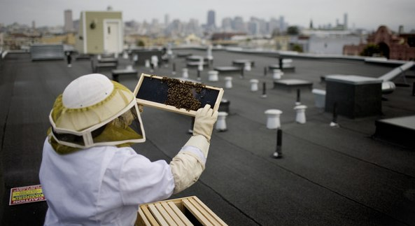 Beekeeping Grows in San Francisco - NYTimes.com.jpg