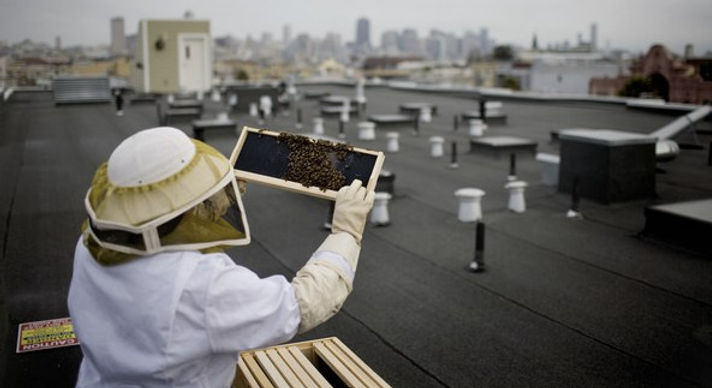 Beekeeping Grows in San Francisco - NYTimes.com.jpg
