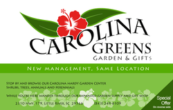 Carolina-Greens-post-card