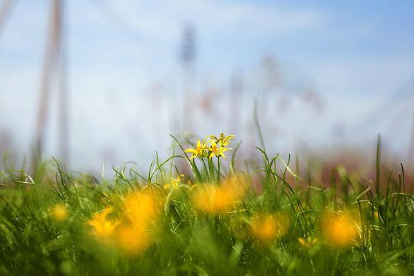grass-3089789.jpg