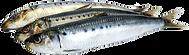 sardines-png-4.png