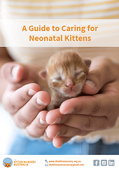 Tile - A guide to caring for neonatal ki