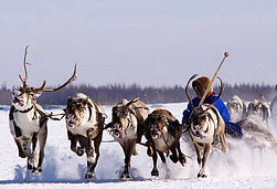 Nenets reindeeer sledge riding filming