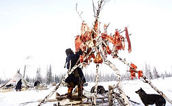 Filming raw meat eating. Nenets tribes in Yamal