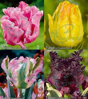 Tulip Parrot Mix4