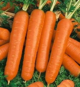 Моркови Тушон от 5гр.