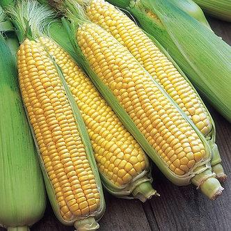 Сладка царевица Ерика от 10 гр.