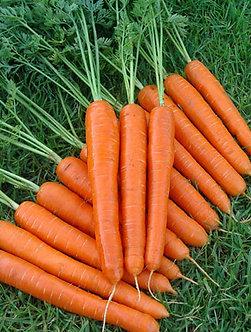 Моркови Нантски от 100 гр. ФРАНЦИЯ