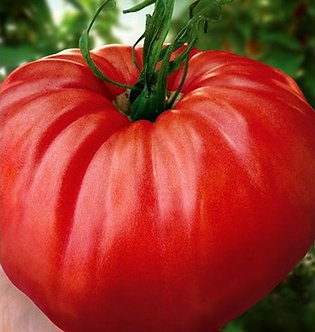 Домати Червен градински от 0,5 гр.