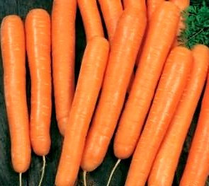 Моркови Амстердам от 5гр.