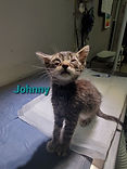 johnny cat.jpg