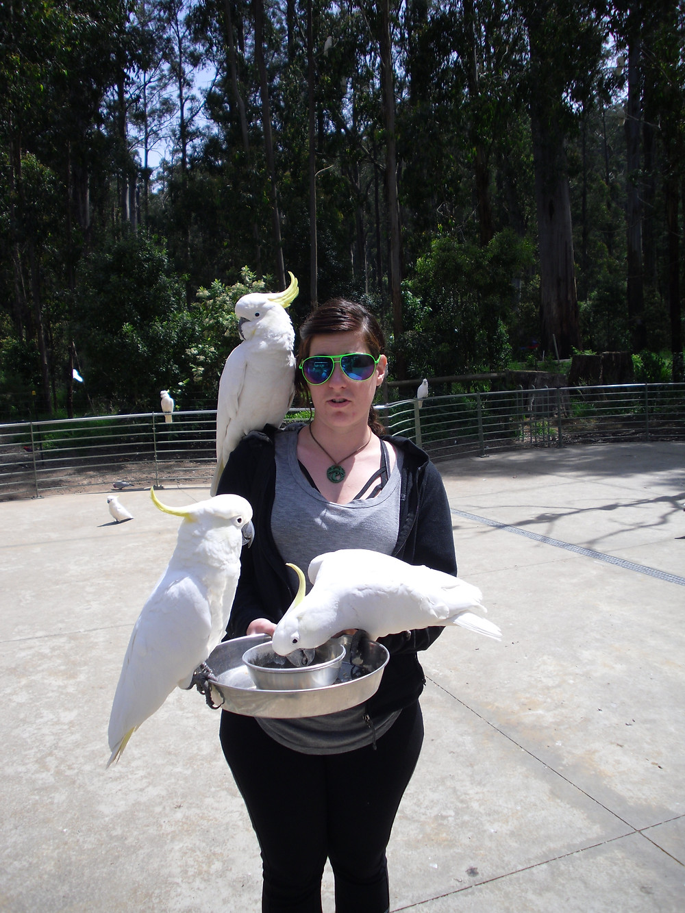 Much carmer birds
