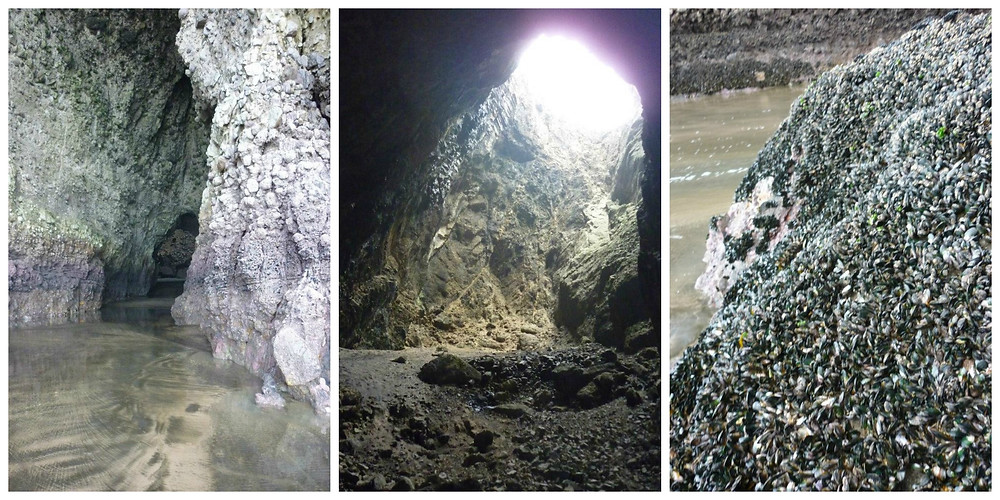 Sea caves Mercer bay