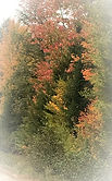 Fall road, Maine, autumn