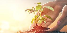Gardening Services Asheville NC