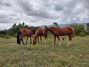 caballos.jpeg