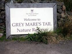 Greymare's tail