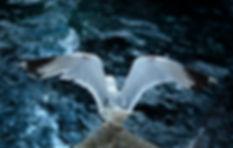 Mediha Didem Turemen - Seagull - 5.jpg