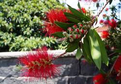 Blühendes Sizilien