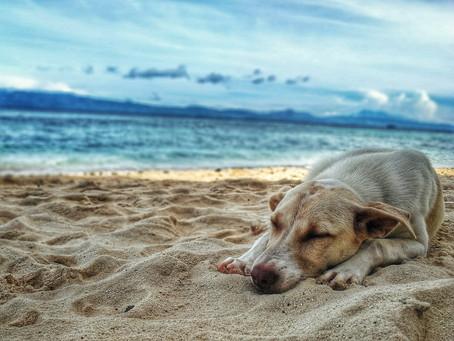 Was das Hundesabbern mit Entspannung zu tun hat