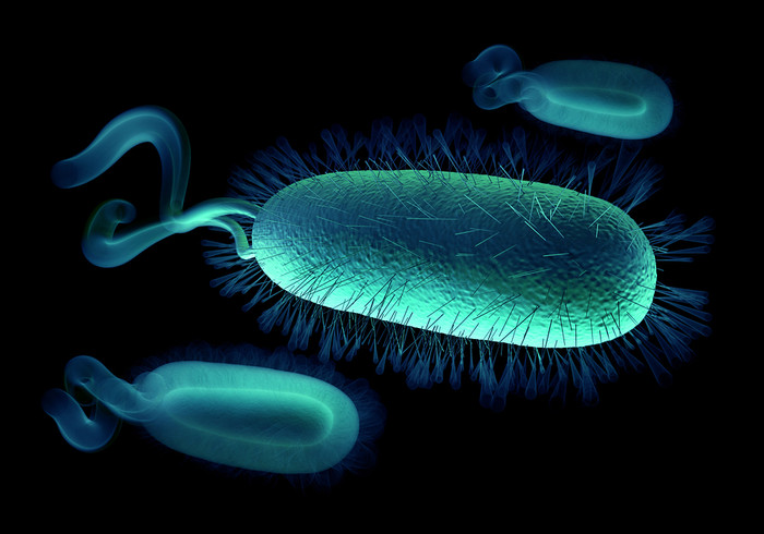 "H-pylori-The Doctor Said, "" You'll Never Get Rid of It!"""