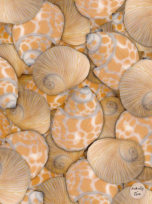 sea shells 102