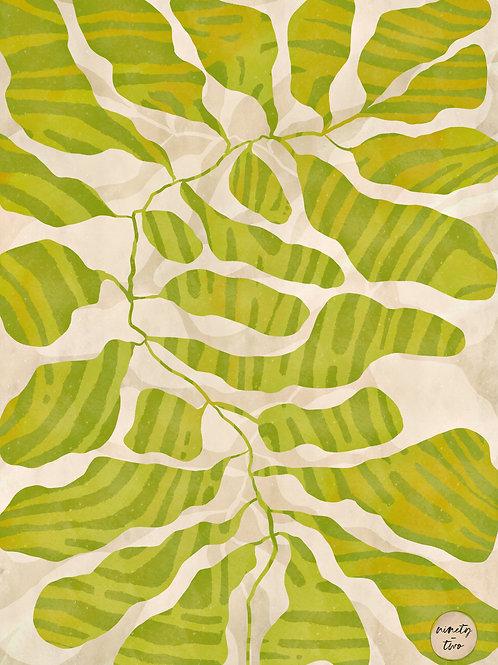 grand leaves