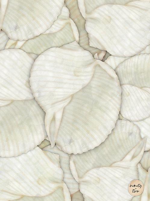sea shells 101