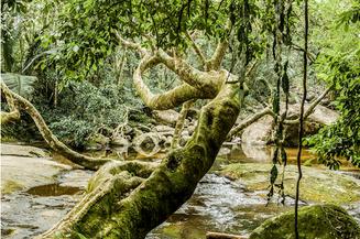 Saco do Mamanguá, Brasil