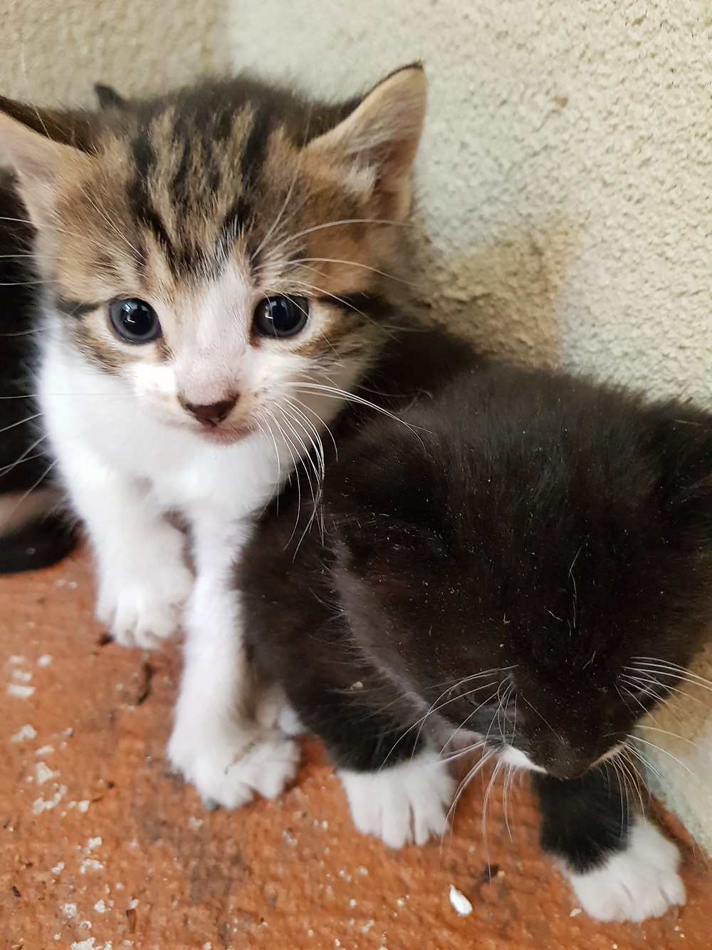 Picture of Kittens