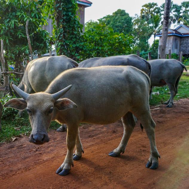 Окрестности Кампонг Тома, Камбоджа