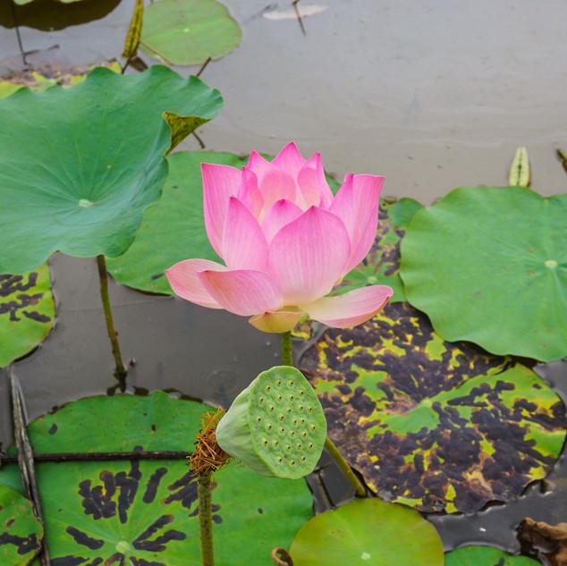 Стунг Тренг, Камбоджа