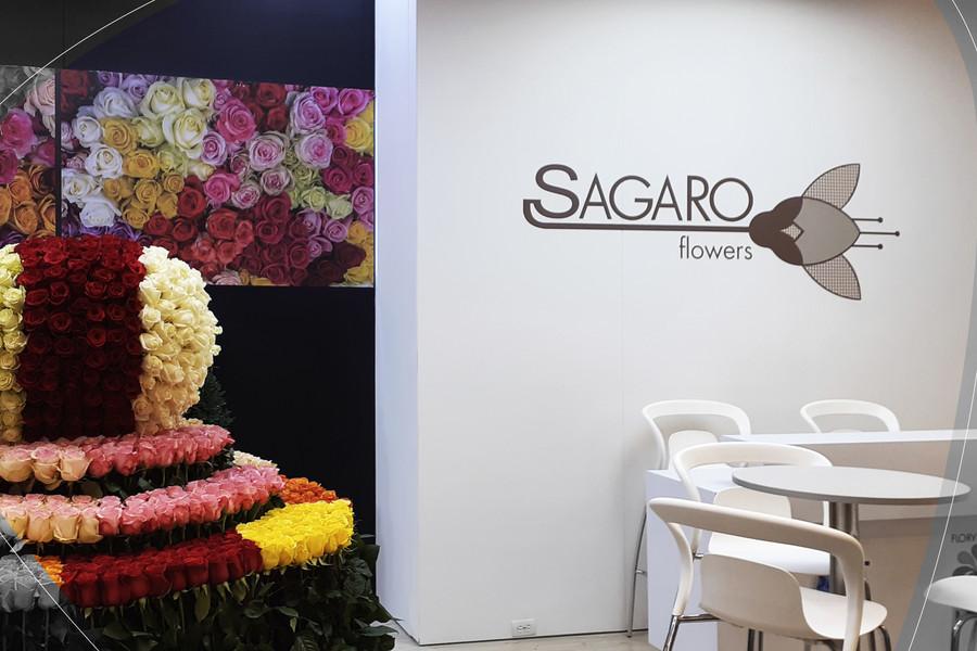 Sagaro 20191001_105052.jpg