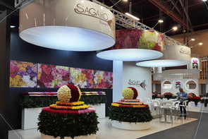 Sagaro Flowers