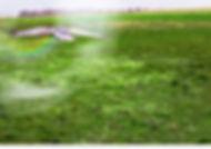 Flying%20Away_edited.jpg