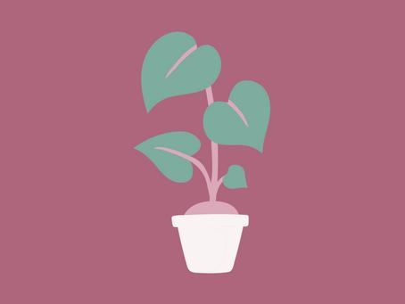 La importancia de las plantas de interior