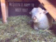 Petting Zoo Cute Animals